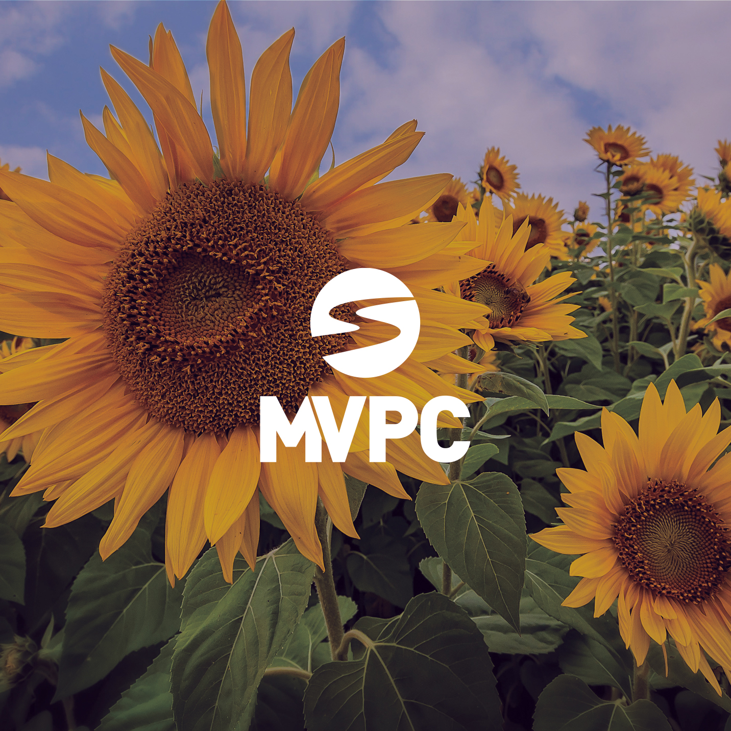 MVPC Logo with Sunflowers